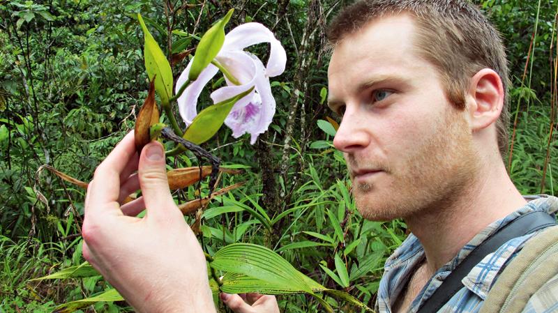 orchideavadász