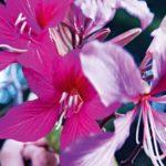 Az orchidea szerelmesei – Hajsza a világ legritkább növényei után