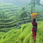 Egzotikus vidékre vágysz? Tarts velünk képzeletben Balira!