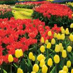 Gyertek velünk Európa virágoskertjébe!