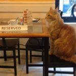Állatbarát kávézók és éttermek itthon
