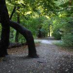 6 festői helyszín a közelgő őszi kirándulásokhoz