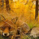 Lenyűgöző Instagram-fotókon az őszi táj szépségei