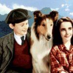 Lassie, Dumbo, Némó és a többiek. Kedvenceinkkel köszöntjük az állatok világnapját