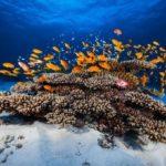 Merülj velünk a víz alá! Ilyen a tengerek és az óceánok csodás világa testközelből