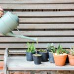Mi a baja a szobanövényednek? 6 gyakori probléma és a megoldásuk