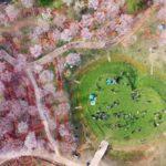 Mesés fotókon a cseresznyefavirágzás Kínában és Japánban