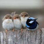 Mulatságos fotókon a világ legmókásabb madarai