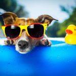 7 nélkülözhetetlen tanács a nyárra kisállattartóknak