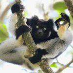 Az idei év legviccesebb állatfotóit nem lehet nevetés nélkül végignézni