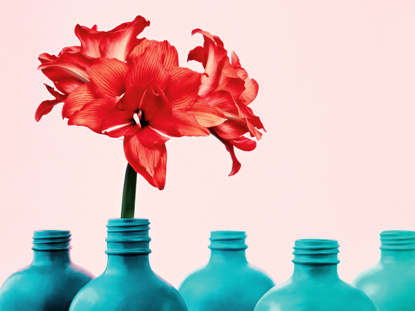 Red amaryllis flower with row of repurposed bottles painted in a teal gradient on pale pink background.